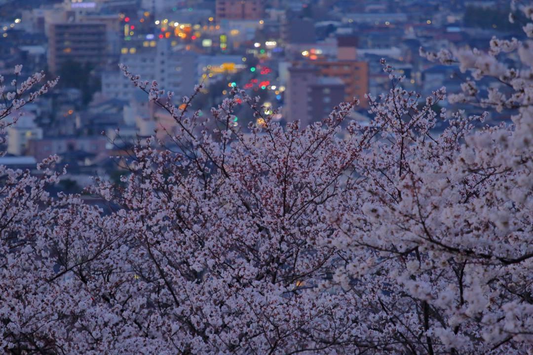 桜 2020_e0403850_12344420.jpg