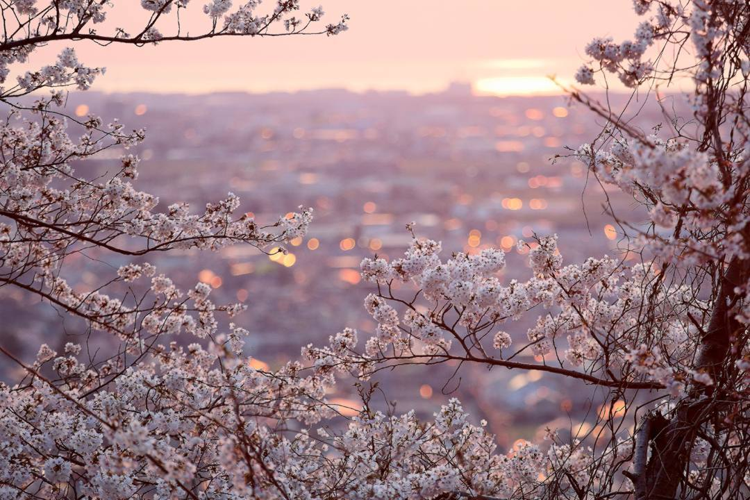 夕焼け桜4/3前編_e0403850_12433527.jpg
