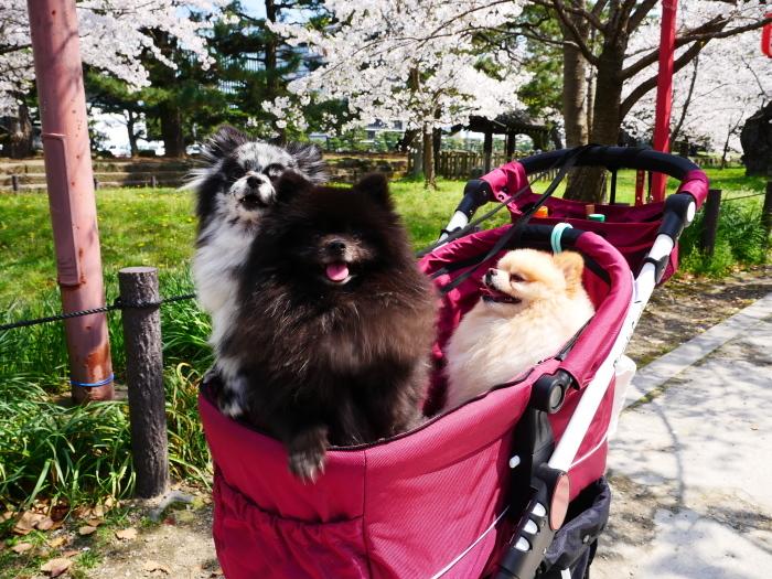 和歌山城公園も花見の宴会禁止  2020-04-07 00:00   _b0093754_23182276.jpg