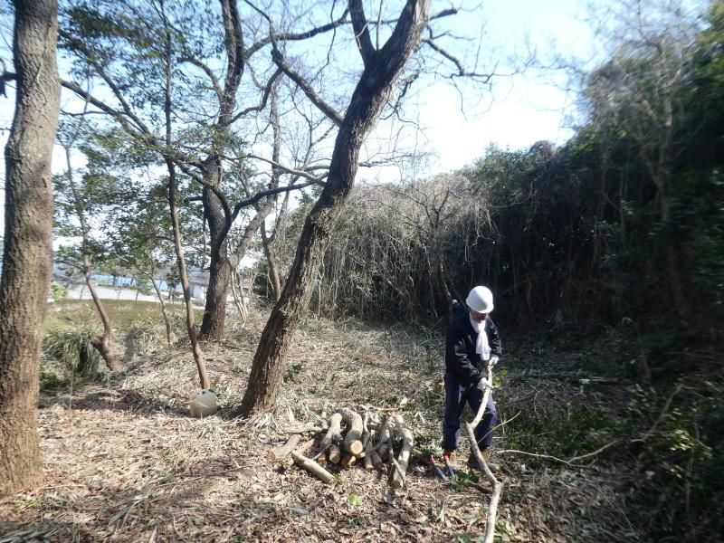 間伐・階段補修・ベンチ造り・ササユリ発芽調査・・・うみべの森_c0108460_15290060.jpg