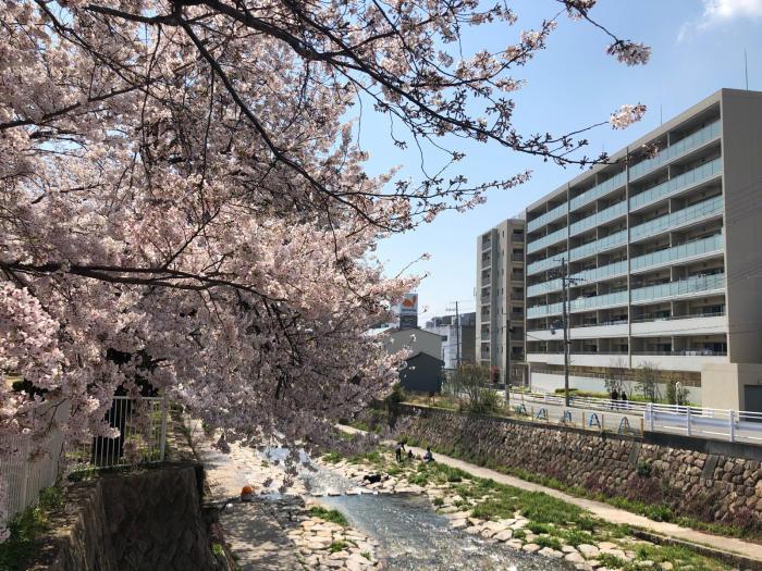 都賀川の桜_e0053660_17483045.jpg