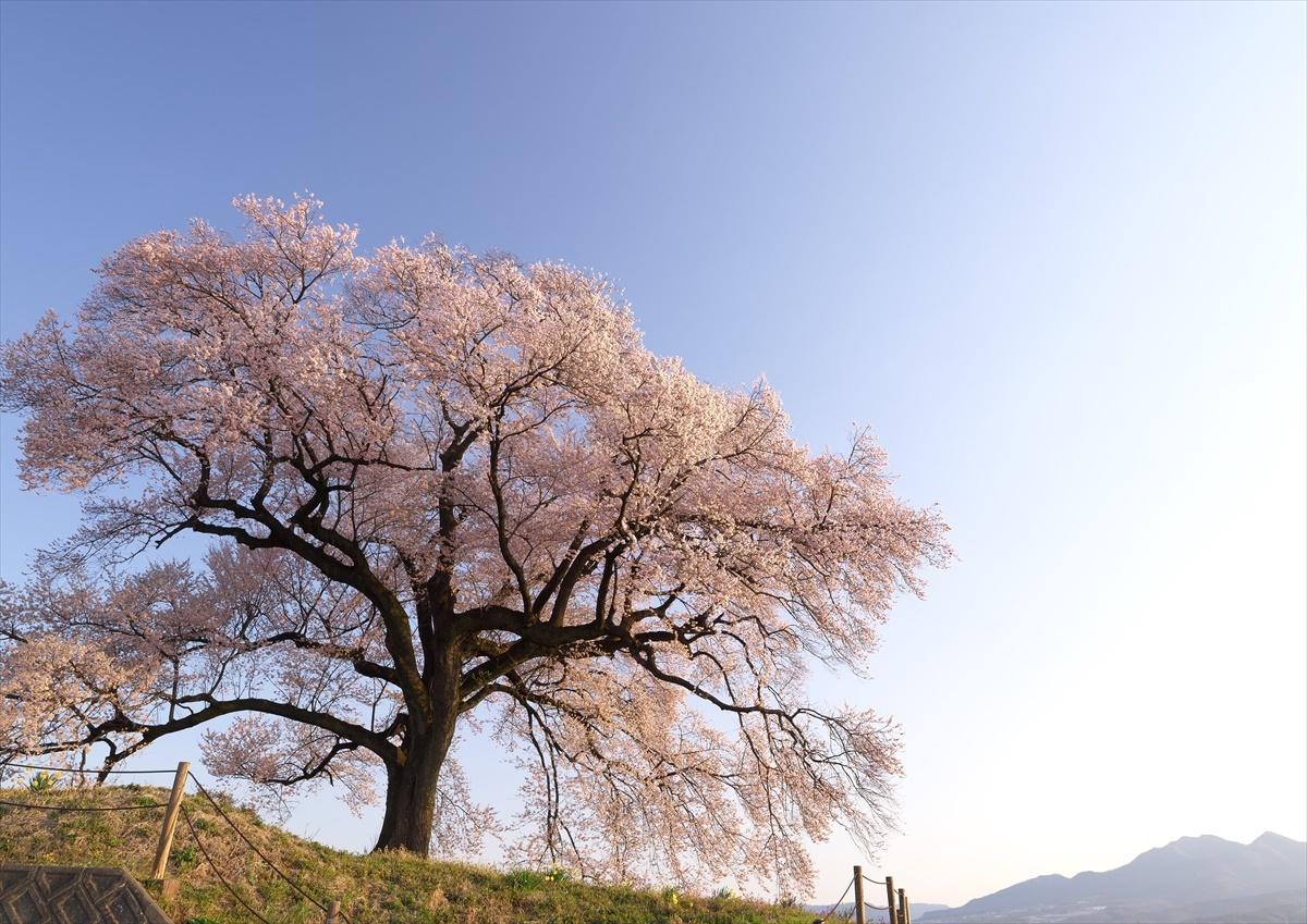わに塚の桜 3_f0018464_22275815.jpg