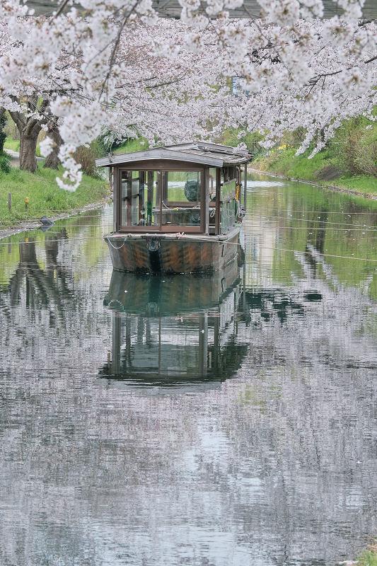 桜 2020_f0021869_14391319.jpg