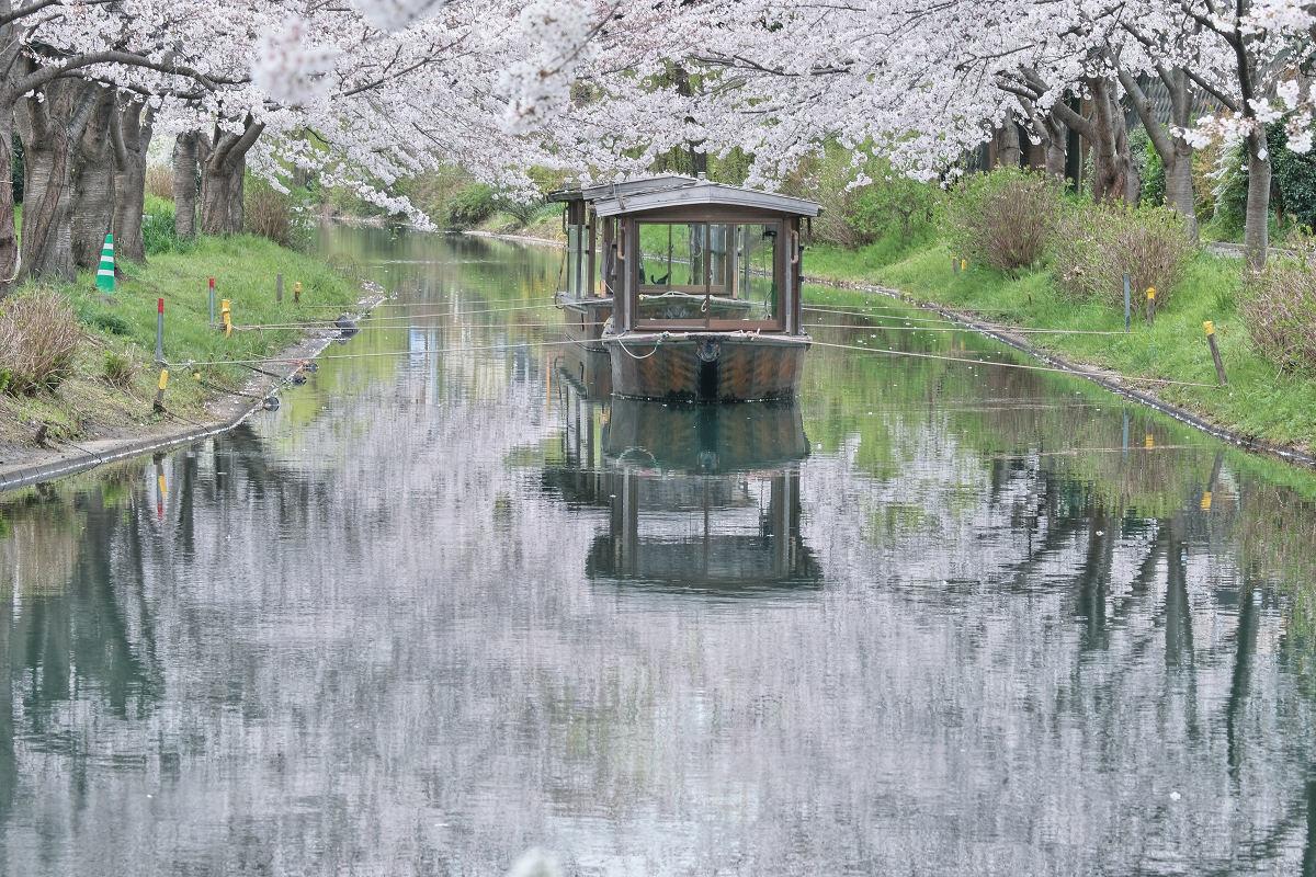 桜 2020_f0021869_14391443.jpg
