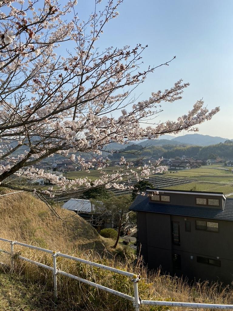 裏山の桜だより⑤ 2020 _c0334574_19032858.jpeg