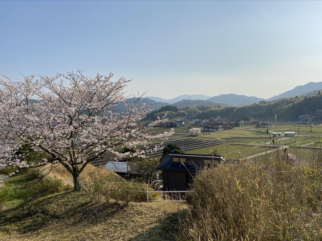 裏山の桜だより⑤ 2020 _c0334574_19060693.jpeg