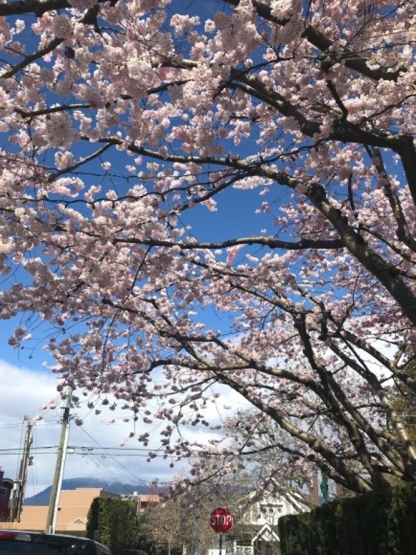 今年の桜_d0129786_18030954.jpg