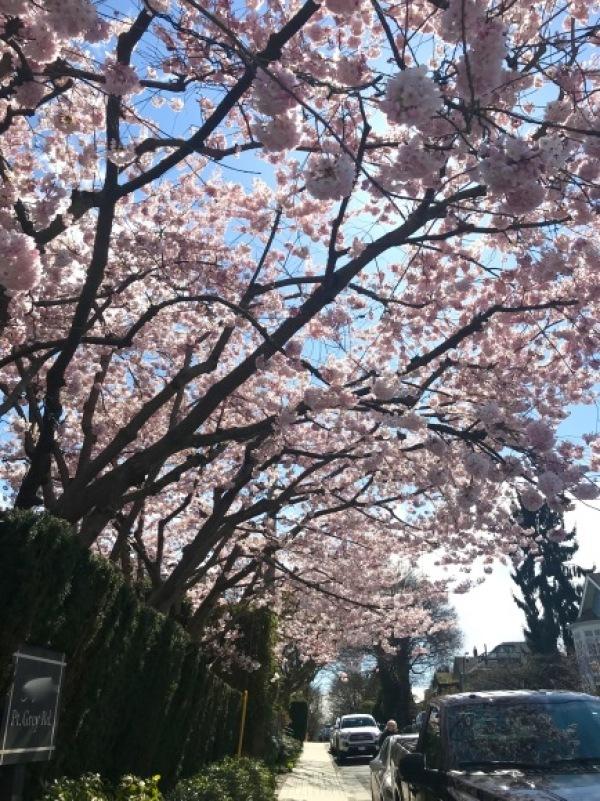 今年の桜_d0129786_18033072.jpg