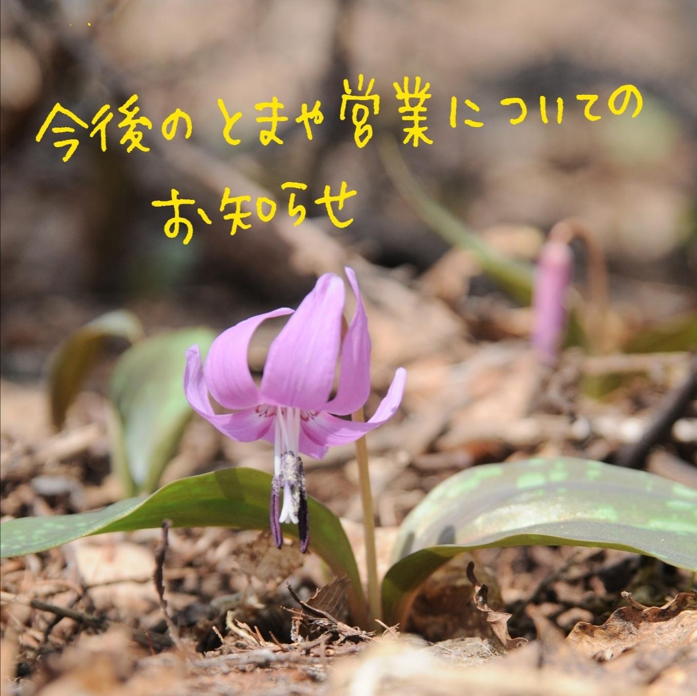 【訂正版】とまや 春からの営業のお知らせ_c0125899_19395547.jpg