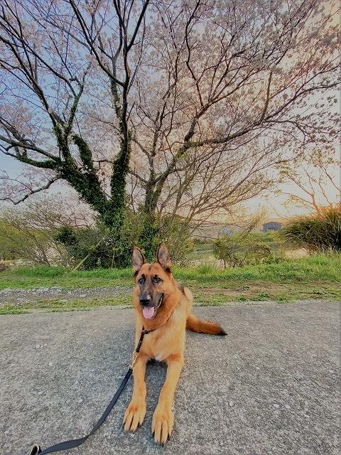 満開の桜の下で_d0360206_00085024.jpg