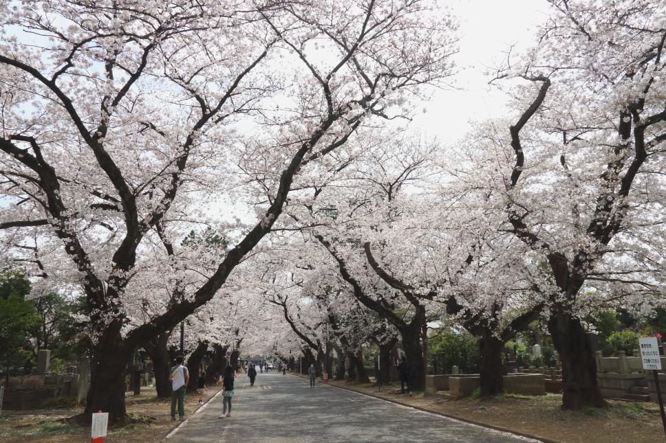 山は新緑の季節 - 2018年・秩父鉄道 -_b0190710_21593705.jpg