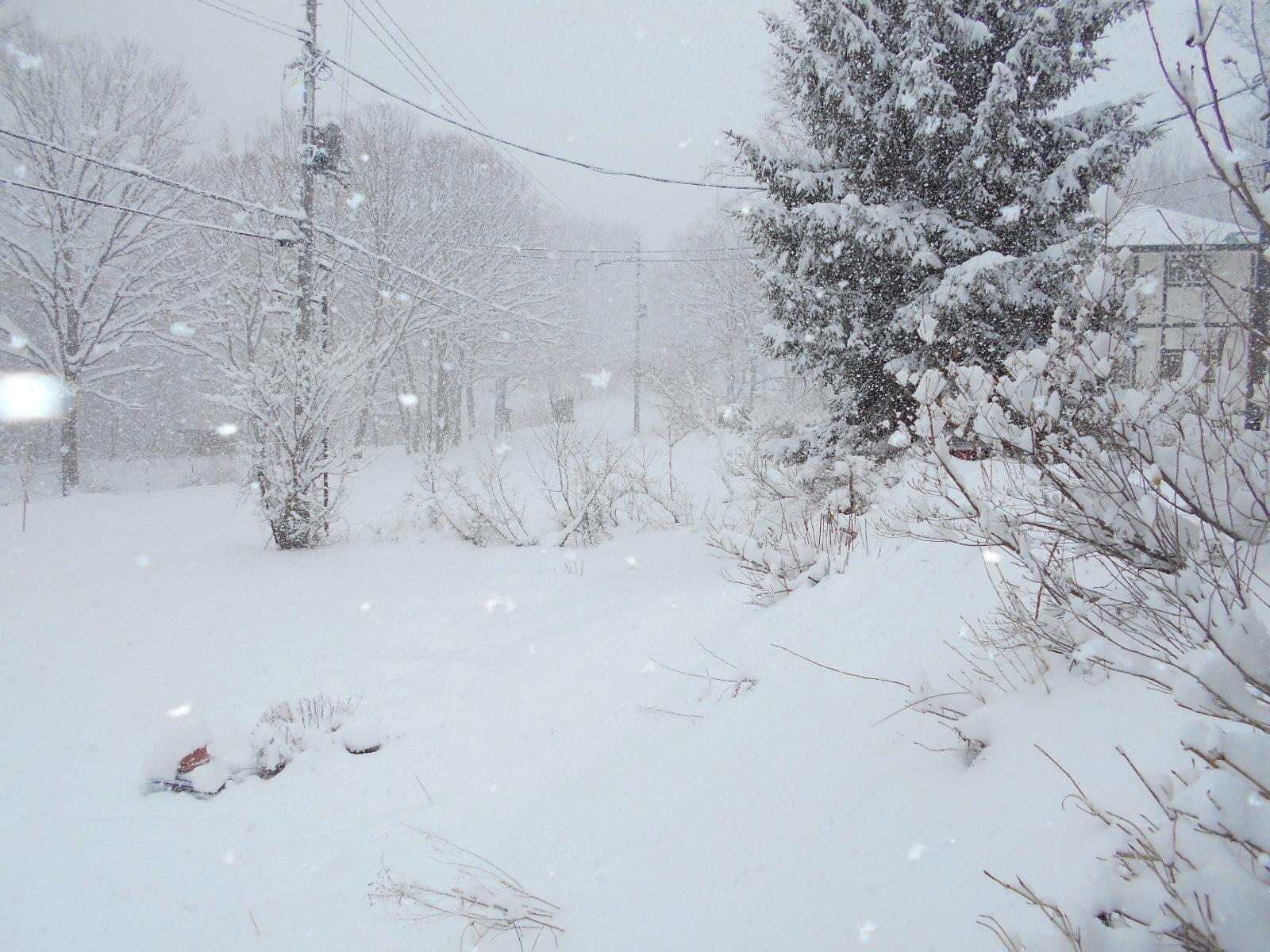 4月6日 月曜日 大雪 0度_f0210811_09105736.jpg