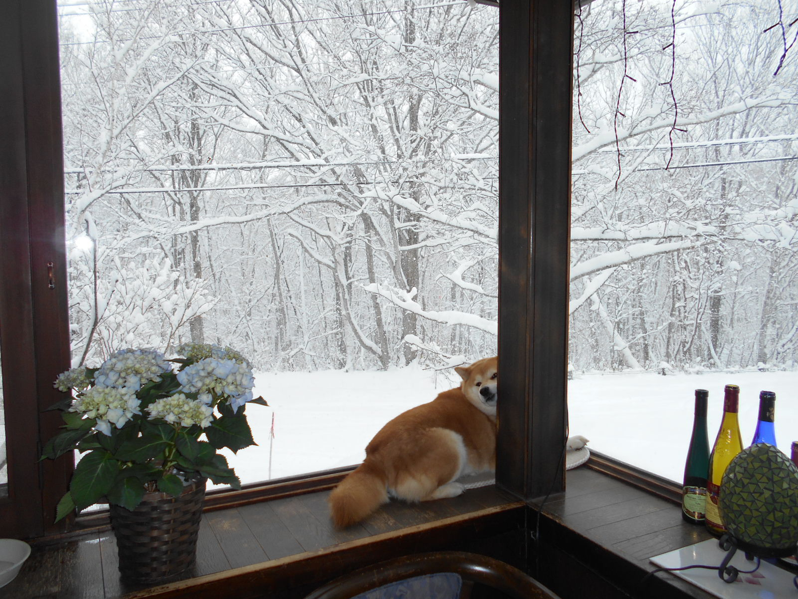 4月6日 月曜日 大雪 0度_f0210811_09211116.jpg