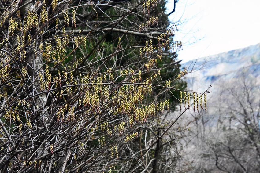 春は縄のれんをかき分けてやってきた_f0115214_10063276.jpg
