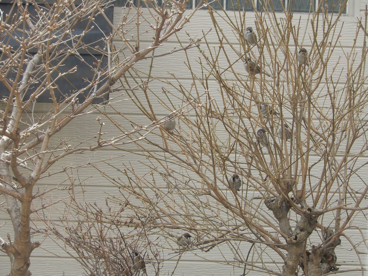 寒さが続きます_c0025115_21564516.jpg