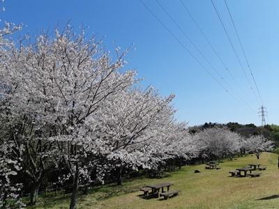 大仏山 桜ウォーキング_f0129726_18143254.jpg