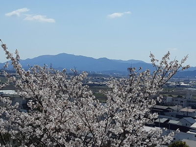 大仏山 桜ウォーキング_f0129726_18143650.jpg