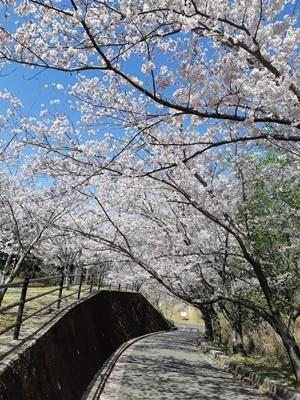 大仏山 桜ウォーキング_f0129726_18143989.jpg