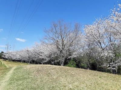 大仏山 桜ウォーキング_f0129726_18144028.jpg