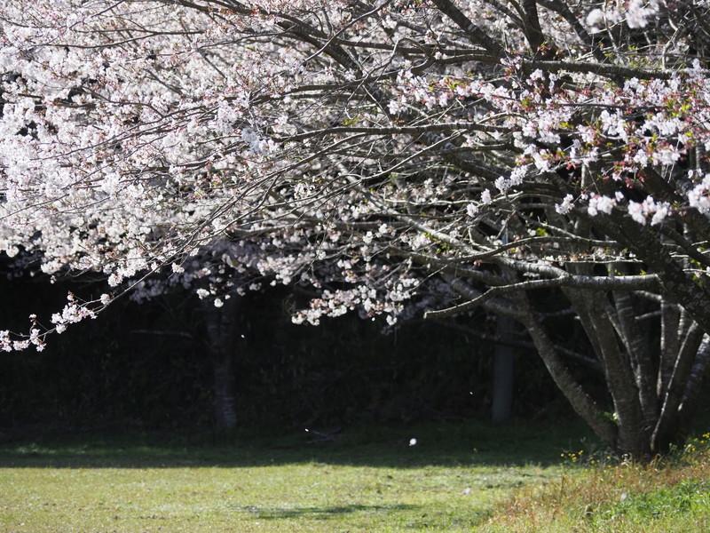 春のおすそ分け_d0052327_20004794.jpg