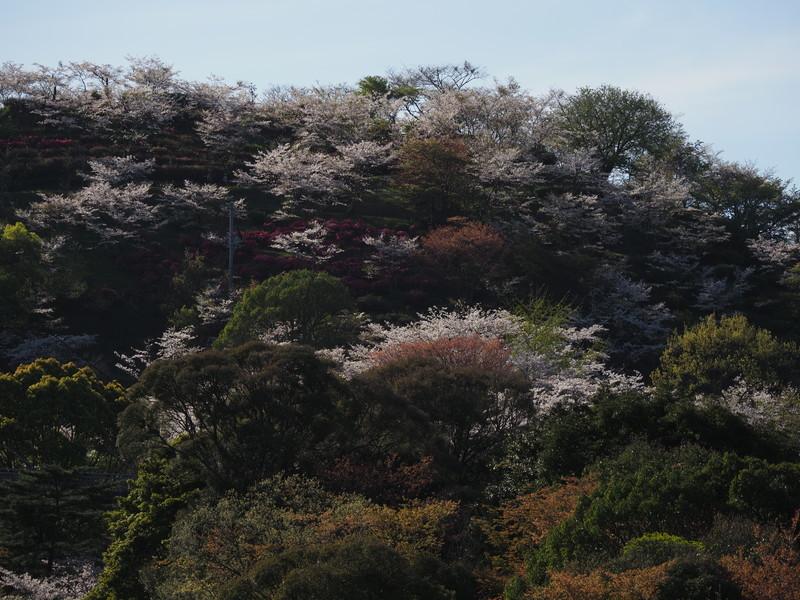 春のおすそ分け_d0052327_20005525.jpg