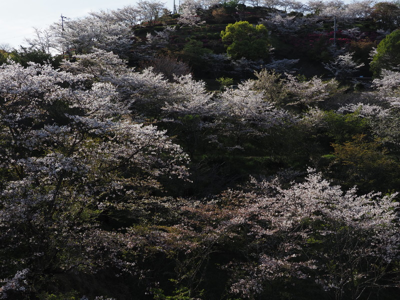 春のおすそ分け_d0052327_20023826.jpg
