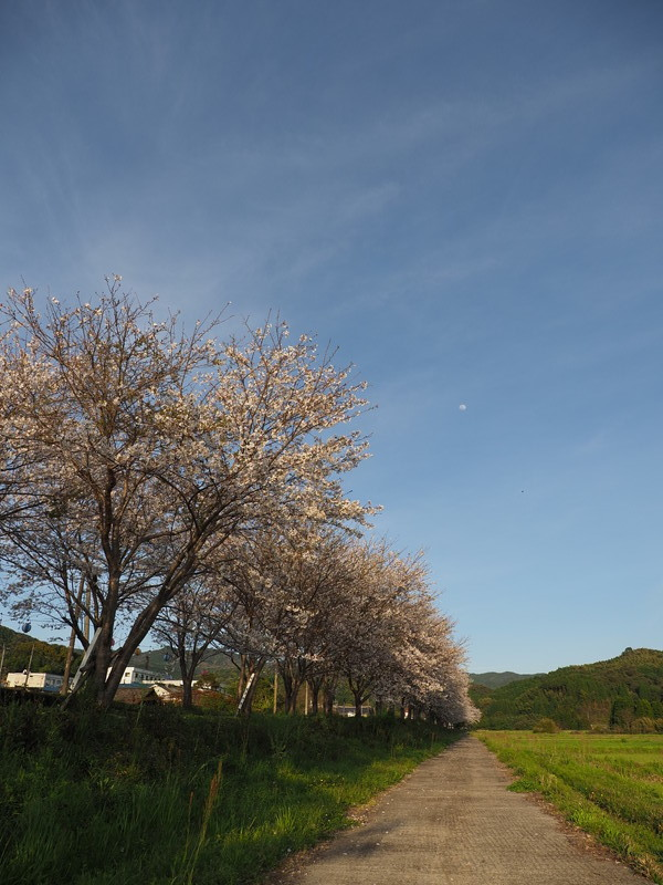 春のおすそ分け_d0052327_20030280.jpg