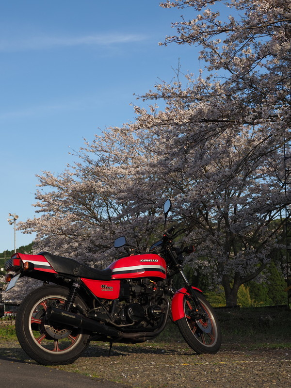 春のおすそ分け_d0052327_20032797.jpg