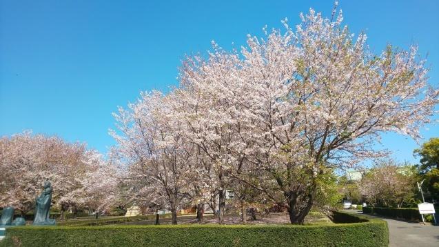 桜と裕次郎_c0124528_16421484.jpg