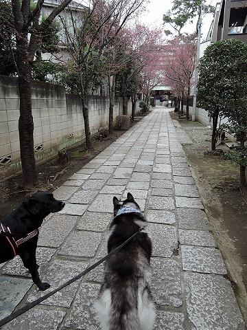 散歩屋日誌【39】 _c0062832_15420245.jpg