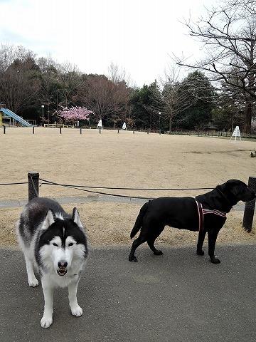 散歩屋日誌【39】 _c0062832_15420252.jpg