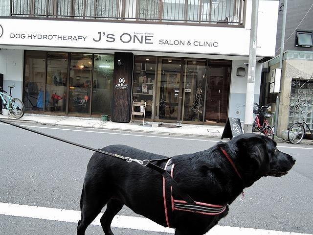 散歩屋日誌【39】 _c0062832_15420269.jpg