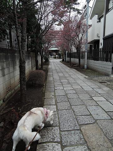散歩屋日誌【39】 _c0062832_15431163.jpg