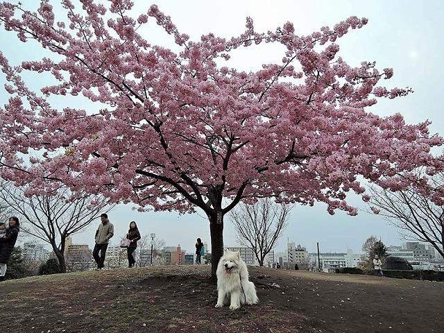 散歩屋日誌【39】 _c0062832_16514835.jpg