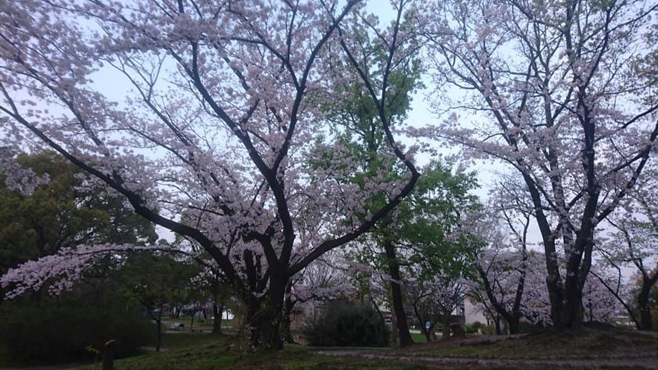 近所をお散歩♪_f0373339_12394987.jpg