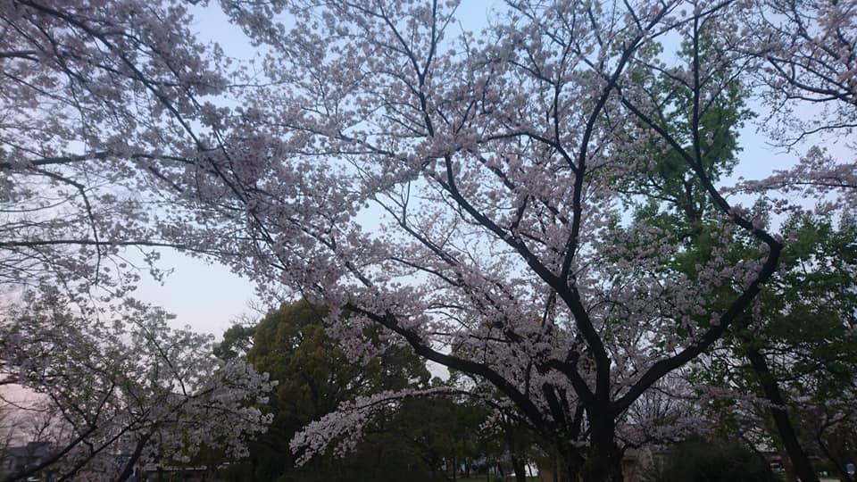 近所をお散歩♪_f0373339_12395033.jpg