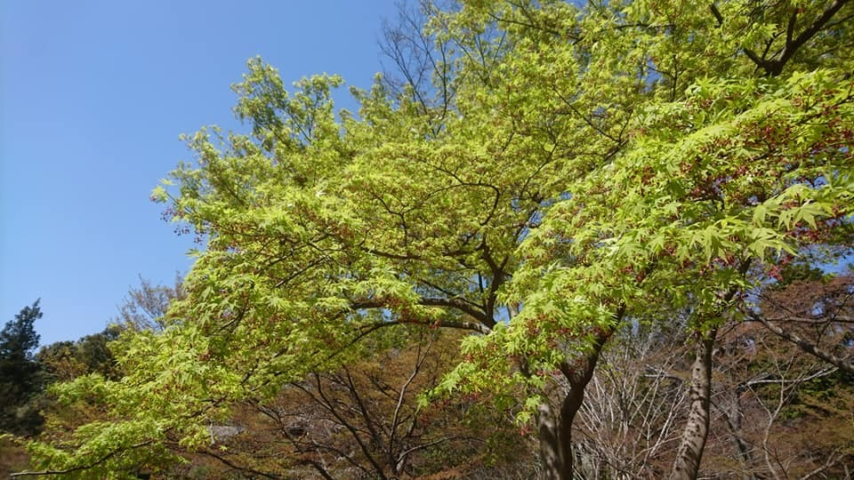 東山動植物園へ行ってきました~也有園編~_f0373339_16022627.jpg