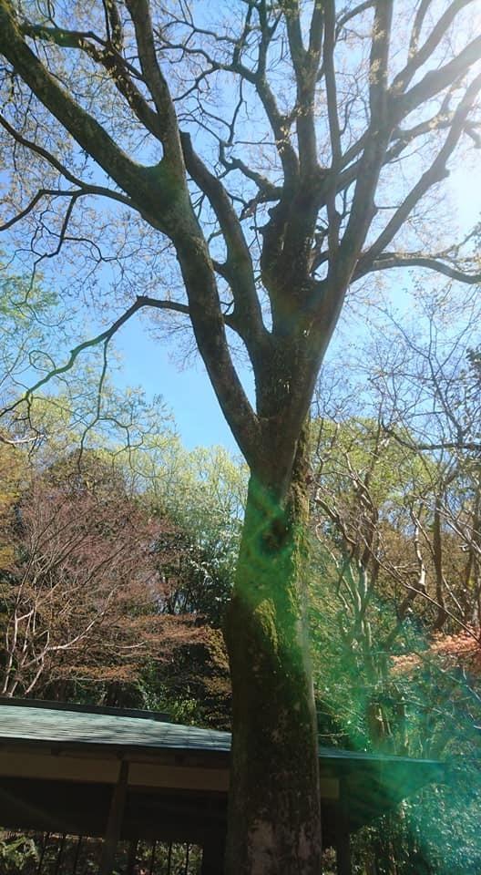 東山動植物園へ行ってきました~也有園編~_f0373339_16153553.jpg
