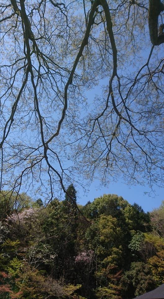 東山動植物園へ行ってきました~也有園編~_f0373339_16203504.jpg