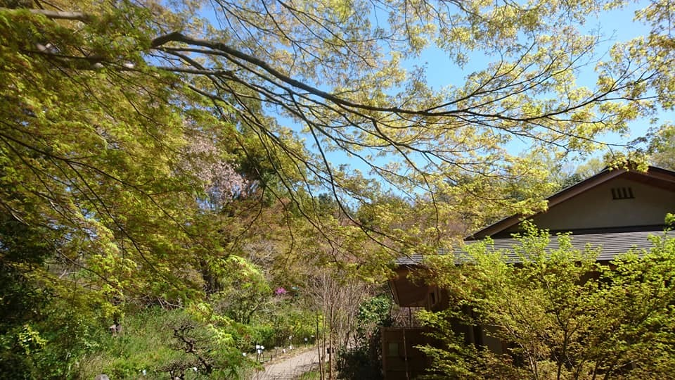 東山動植物園へ行ってきました~也有園編~_f0373339_16212896.jpg