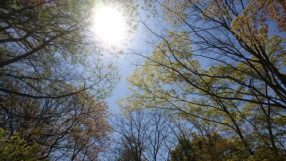東山動植物園へ行ってきました~也有園編~_f0373339_16221457.jpg