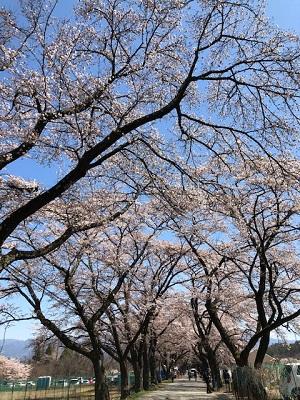 お花見ドライブ_f0019247_15464499.jpg
