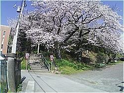賀茂川神社は神事のみ_c0087349_14411402.jpg