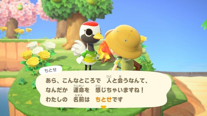 ゲーム「あつまれどうぶつの森 ちとせキタァァァァ!!!!!」_b0362459_23071776.jpg