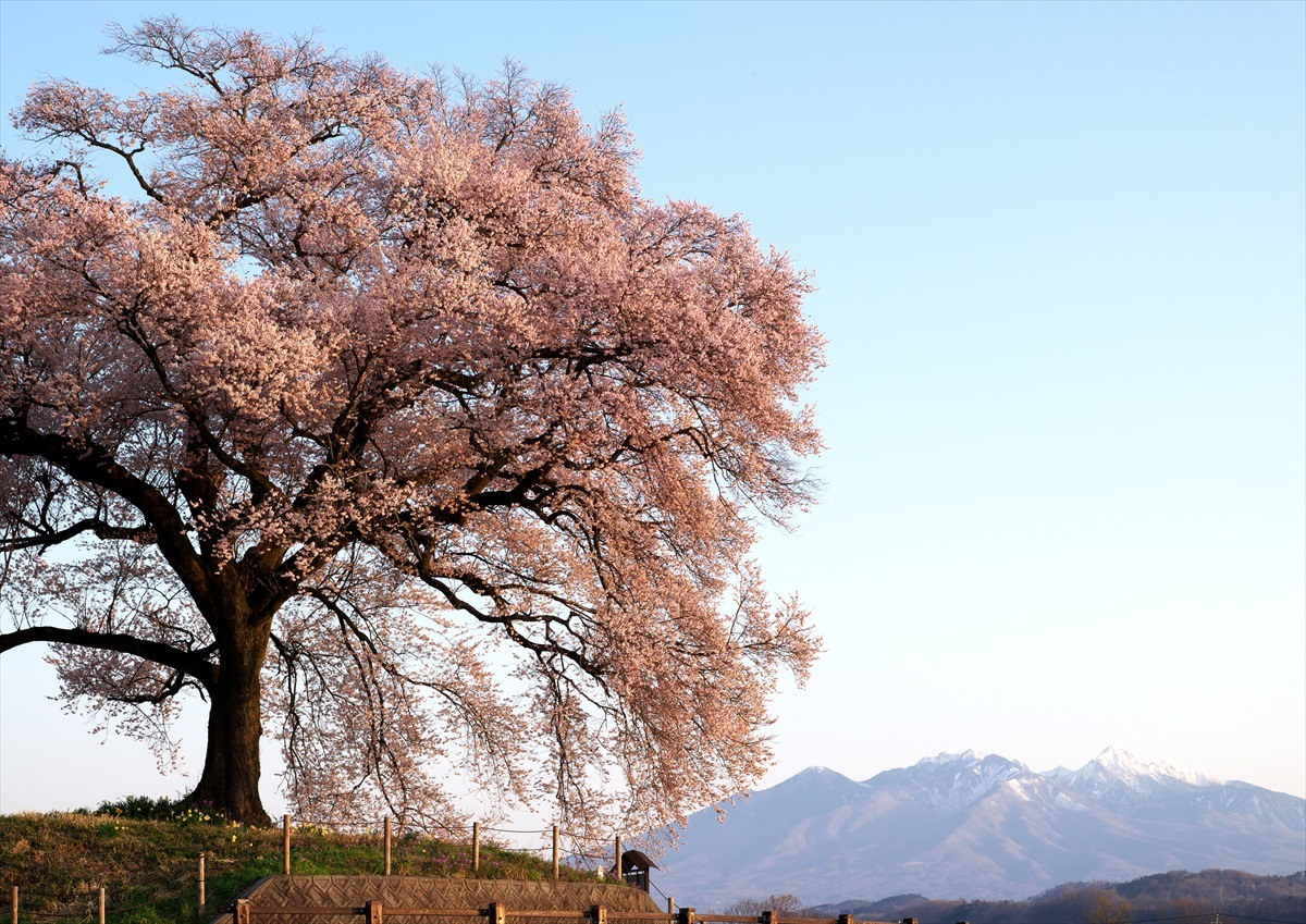 わに塚の桜 2_f0018464_14340310.jpg