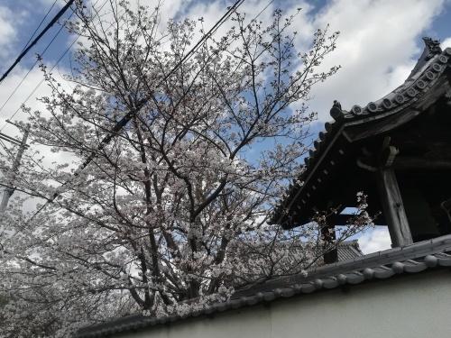 文書整理と桜見_a0111166_07470187.jpg