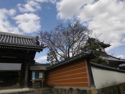 文書整理と桜見_a0111166_07483553.jpg
