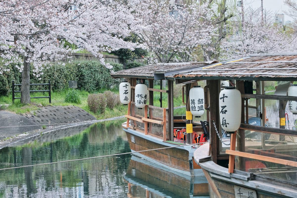 桜 2020_f0021869_00102179.jpg