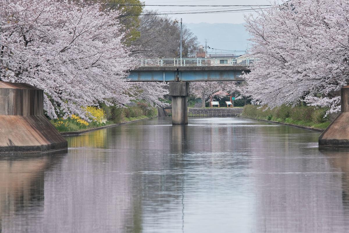 桜 2020_f0021869_00102211.jpg
