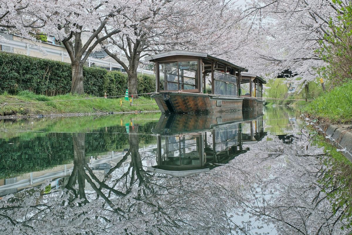 桜 2020_f0021869_00102223.jpg